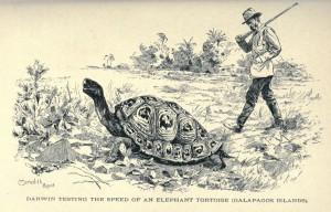 Darwin-e-la-tartaruga